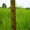 ภาพจาก http://www.flickr.com/photos/vscript/4868929451/