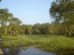 ป่าพรุควน ที่มาภาพ : http://chm-thai.onep.go.th