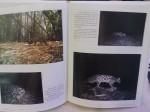"""ตัวอย่างภาพในหนังสือ """"แม่วงก์-คลองลาน ผืนป่าแห่งความหวัง"""""""