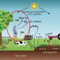 งานวิจัยเกษตรอินทรีย์กับการปล่อยคาร์บอน