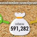 thaipublica-coverมาตรการข้าว